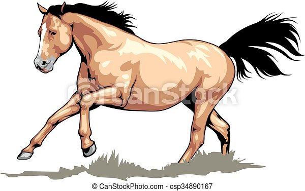 nice brown horse  - csp34890167