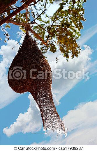 nido uccello, albero - csp17939237