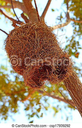 nido uccello, albero - csp17939292