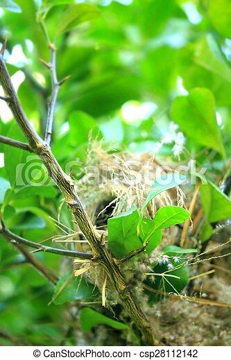 nido uccello, albero - csp28112142