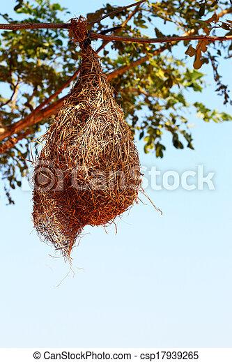 nido uccello, albero - csp17939265