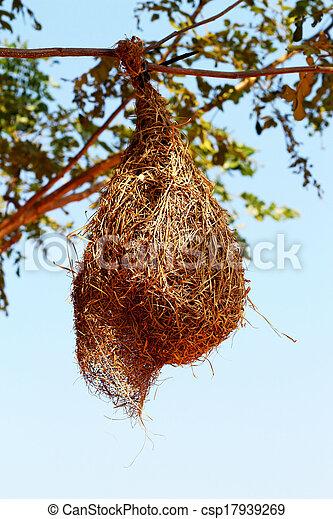 nido uccello, albero - csp17939269
