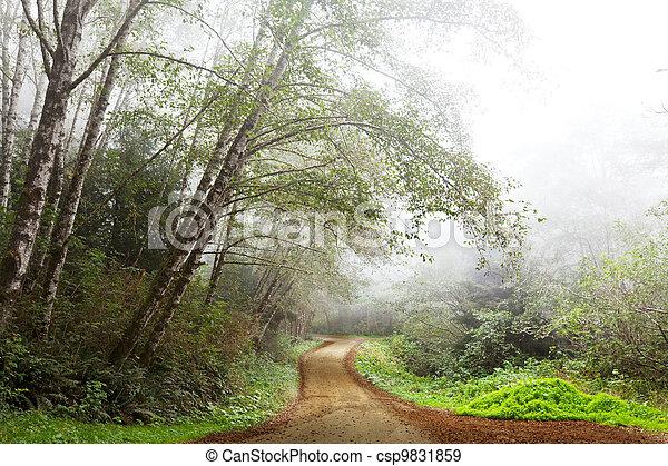 niebla, bosque - csp9831859