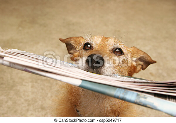 nieuws, dog, alledaags - csp5249717