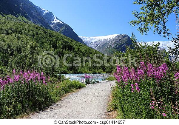Nigardsbreen glacier in Norway - csp61414657