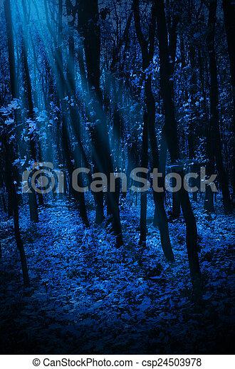 Night forest - csp24503978