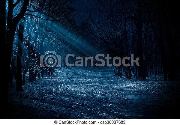 Night forest - csp30037683