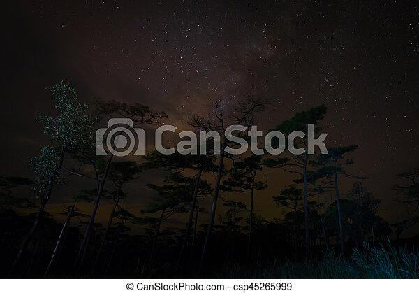 Night forest scene - csp45265999