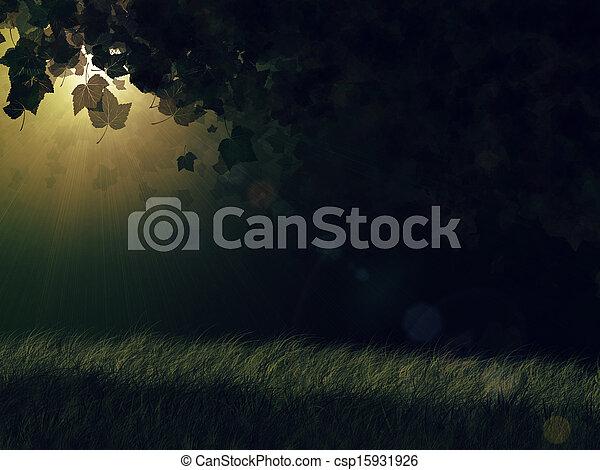 Night forest - csp15931926