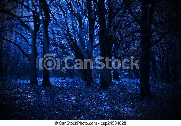 Night forest - csp24504028
