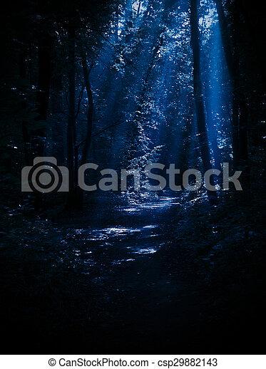 Night forest - csp29882143
