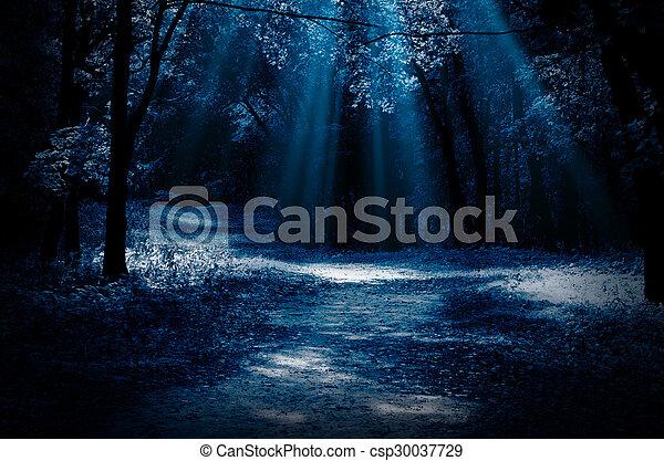 Night forest - csp30037729