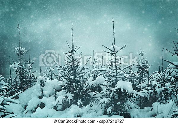 night forest - csp37210727