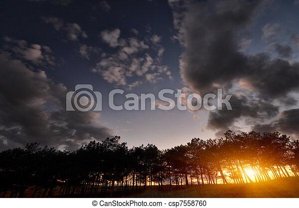 night forest - csp7558760