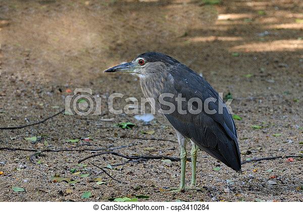Night Heron - csp3410284