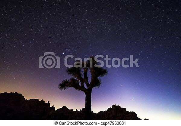 Night Sky Over Joshua Tree National Park California