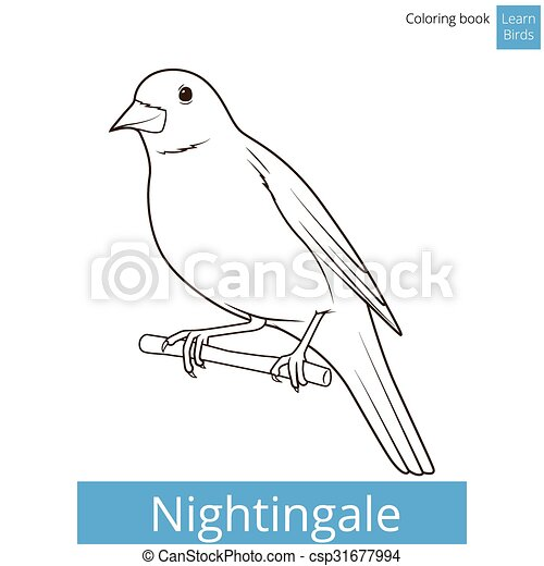 Nightingale learn birds coloring book vector. Nightingale learn ...