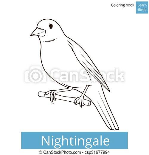 Nightingale learn birds coloring book vector. Nightingale learn ...