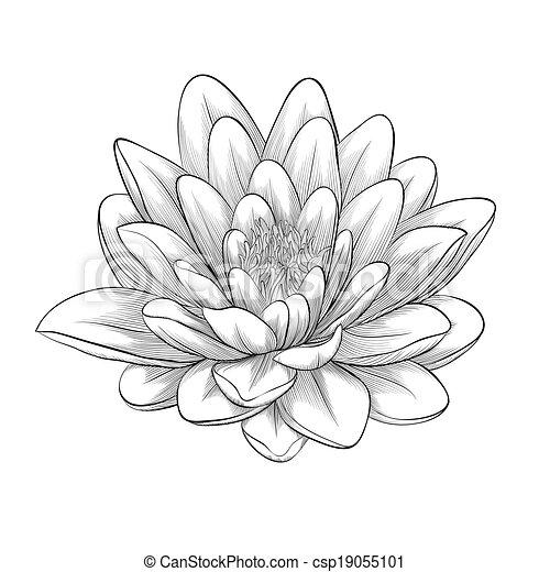 Photos Et Images De Lotus Noir Blanc Fleur Monochrome 192