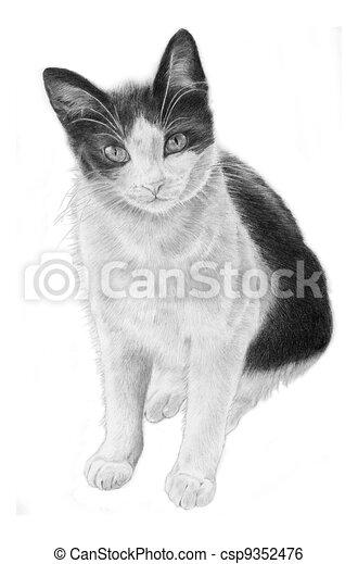 Noir Chat Blanc Illustration