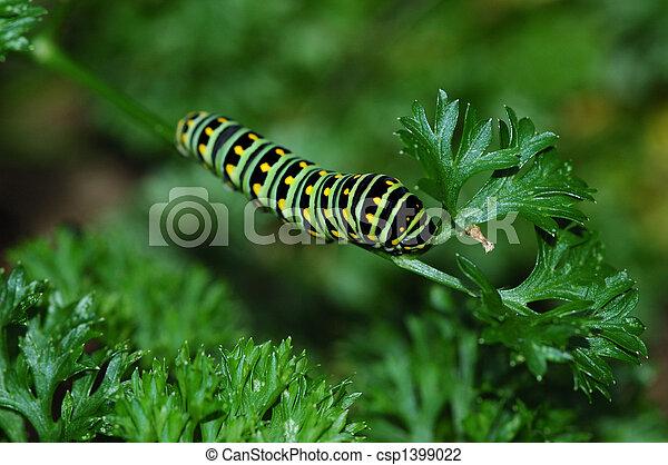 Noir chenille swallowtail papillon image macro jaune photo de stock rechercher - Chenille verte et noire ...