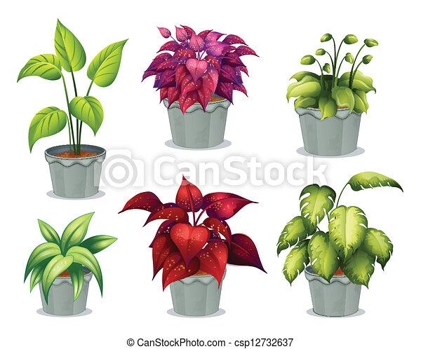 non-flowering, 植物, 6 - csp12732637