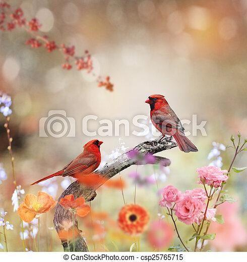 noordelijke kardinalen - csp25765715