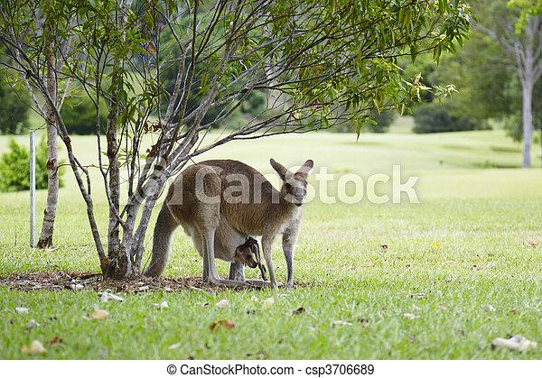 Noosa,Noosa Valley Country Club, golf course, Sunshine Coast, Queensland, Australia Noosa Valley Country Club, Golfplatz bei Noosa, Sunshinecoast, Queensland, Australien - csp3706689