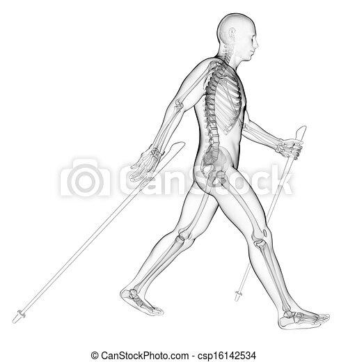 Nordic walker - csp16142534