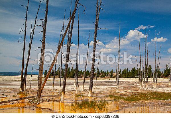 Norris Geyser Basin in Yellowstone National Park, Wyoming, USA. - csp63397206