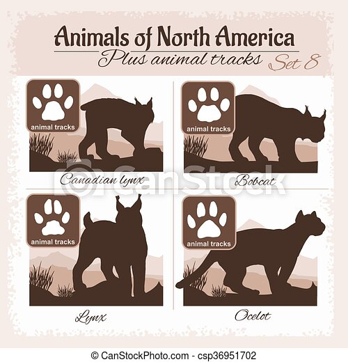 Animales de Norteamérica y huellas de animales, pisadas. - csp36951702