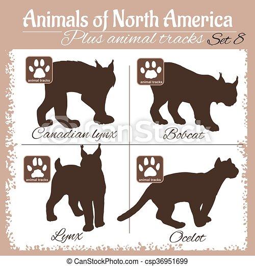 Animales de Norteamérica y huellas de animales, pisadas. - csp36951699