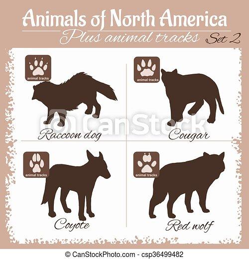 Animales de Norteamérica y huellas de animales, pisadas. - csp36499482