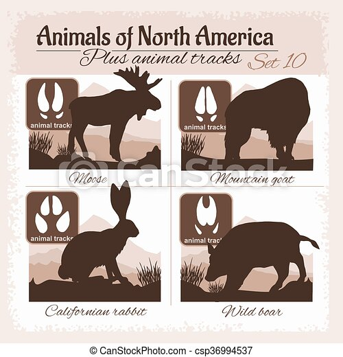 North America animals and animal tracks, footprints. - csp36994537