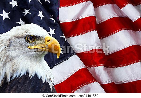 North American Bald Eagle on American flag - csp24491550