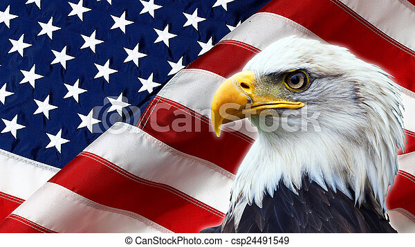 North American Bald Eagle on American flag - csp24491549