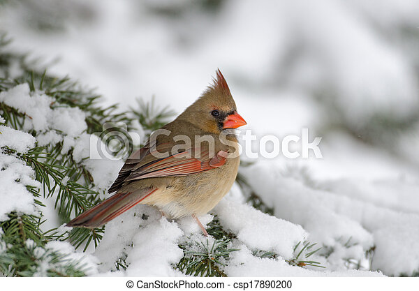 Northern cardinal in a tree - csp17890200