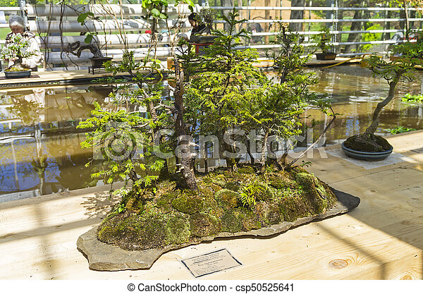 Moscow Russia May 18 2017 Norway Spruce Bonsai In The Style Of Grove Exhibition Of Bonsai In Aptekarsky Ogorod A Canstock