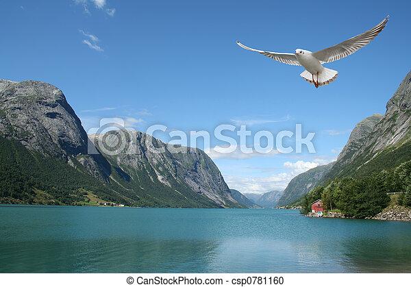 norweg, seagull lecący, fiordy - csp0781160