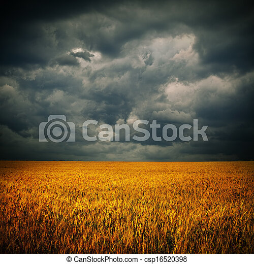 nuages sombres, sur, champ blé - csp16520398
