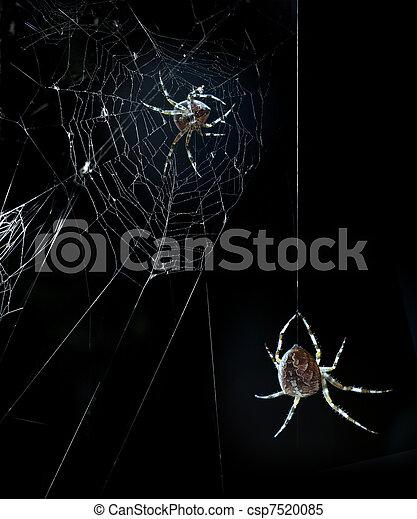 nuit halloween, fête, araignées - csp7520085