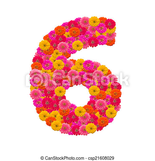 number 6 made from Zinnias flowers - csp21608029