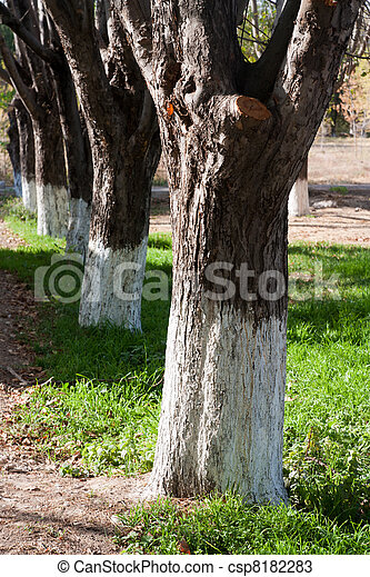 number of trees in the park - csp8182283