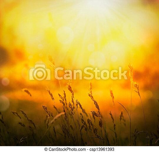 nyár, háttér - csp13961393