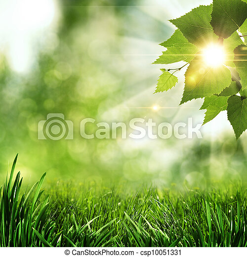 nyár, természetes, elvont, háttér, reggel, korán, erdő - csp10051331