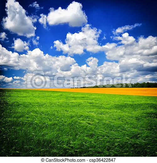 nyár, zöld, nap, mező - csp36422847