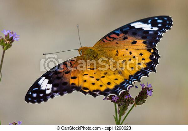Nymphalidae - csp11290623