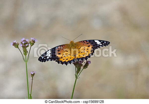 Nymphalidae - csp15699128