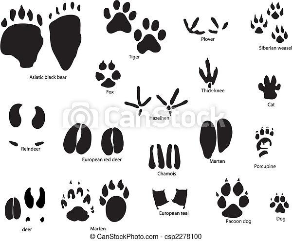 nyomoz, állat, cím - csp2278100