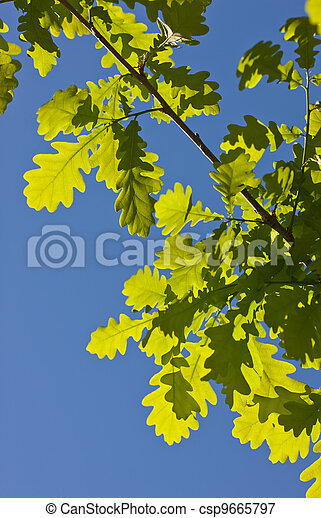 oak branch in the spring - csp9665797